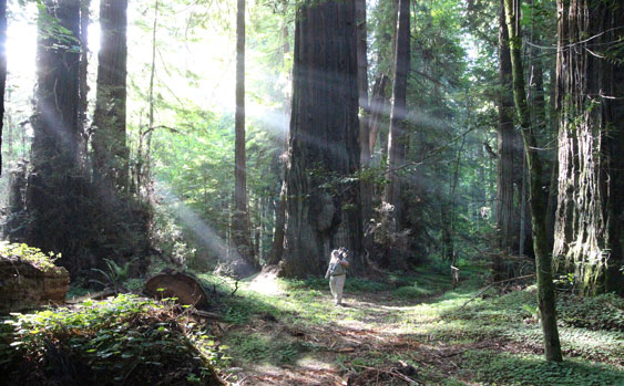 1115jones-carter-clyde-with-sun-rays-in-redwood-forest